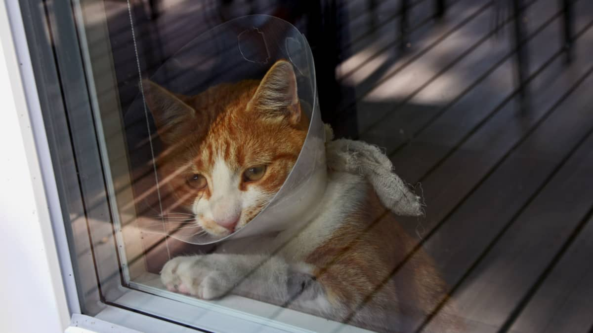 Sputnik viihtyy ulkona, mutta joutuu nyt odottamaan sisällä haavojensa paranemista sekä sitä, että infektioriski on ohi.