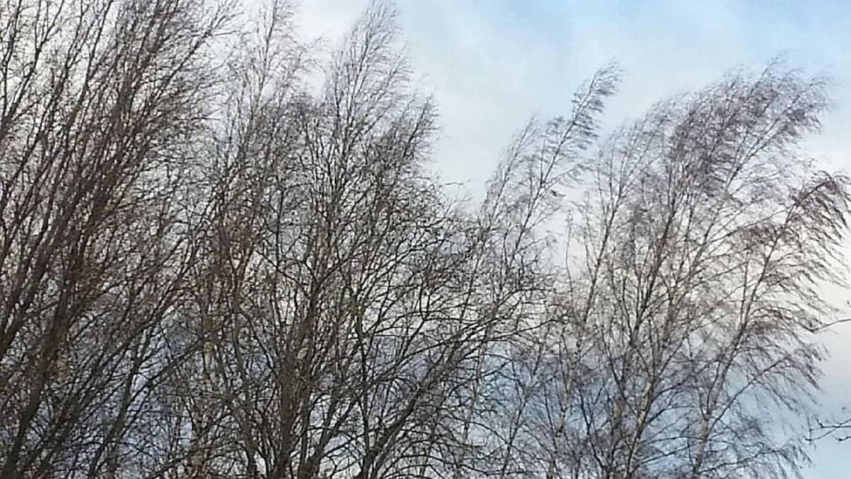 Eino-myrsky taivutteli puita.