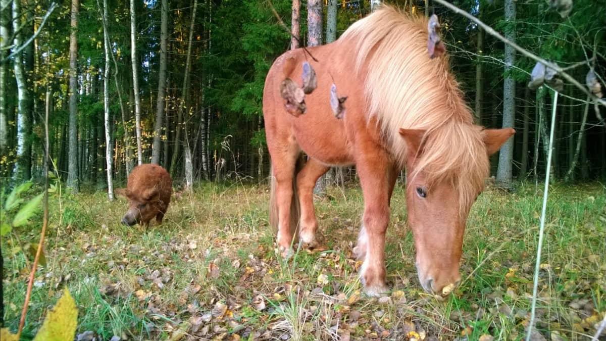 Frigg ja Alma tutkimusretkellä metsässä.