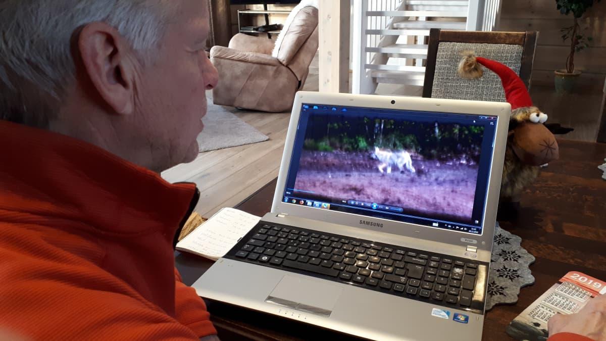 Pertti Vuorinen, susi tietokoneen näytöllä