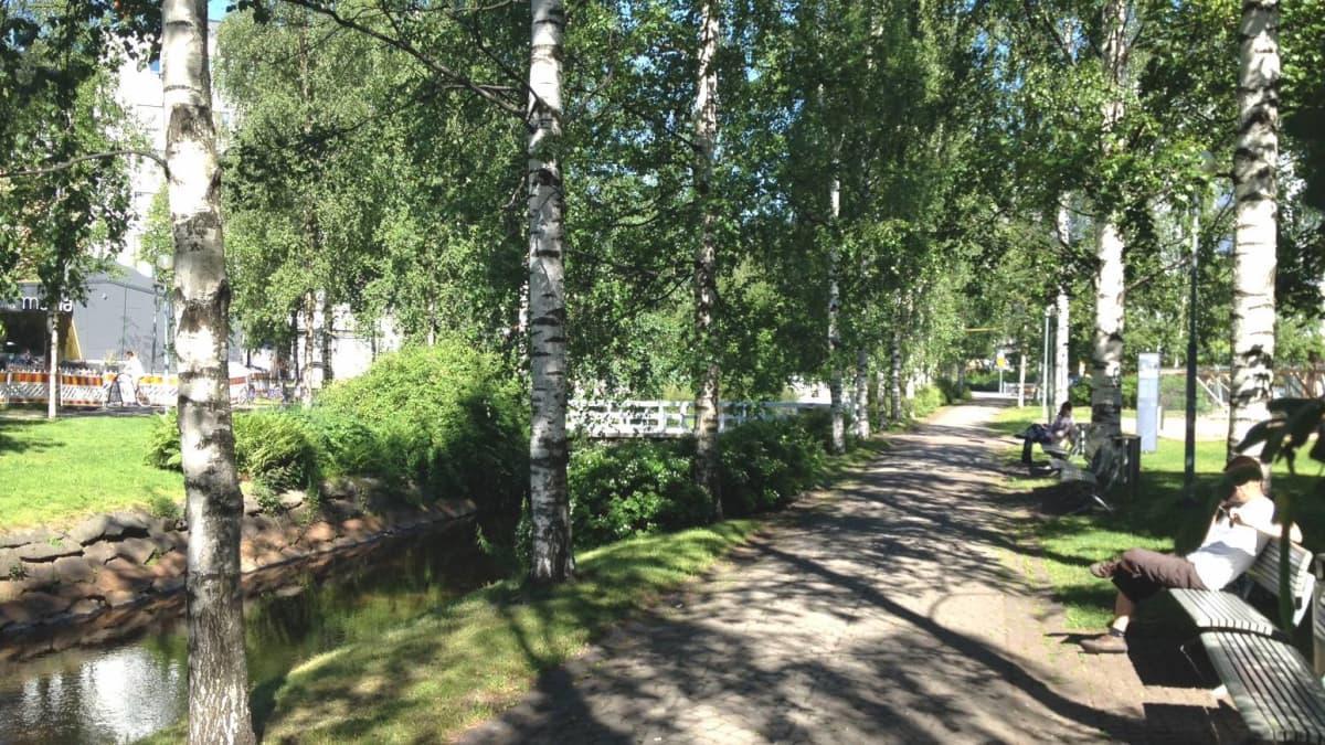 Idyllisessä Oulun Letkunpuistossa käydään rottasotaa pientä rottaesiintymää vastaan.