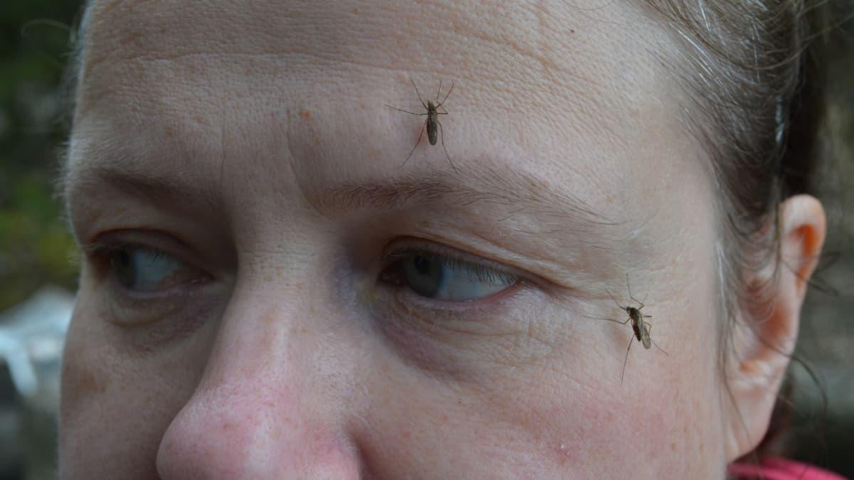Kaksi hyttystä naisen kasvoilla.