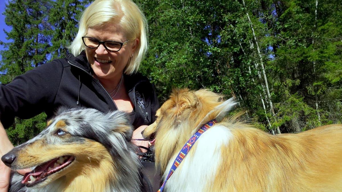 Marja Soinisella on shetlanninlammaskoiria.