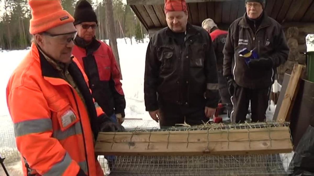 Yle Uutiset Kaakkois-Suomi: Näin rakennat pesän sorsalle