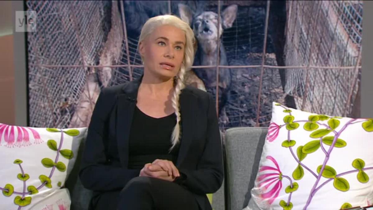 Ylen aamu-tv: Koiranpentujen salakuljetus kasvanut