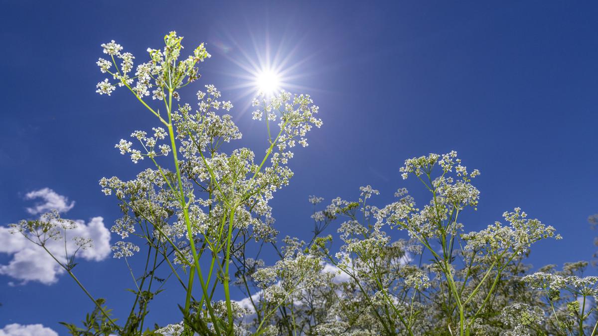 Luonto on heräämässä - tule mukaan kävelylle keväiseen puroluontoon