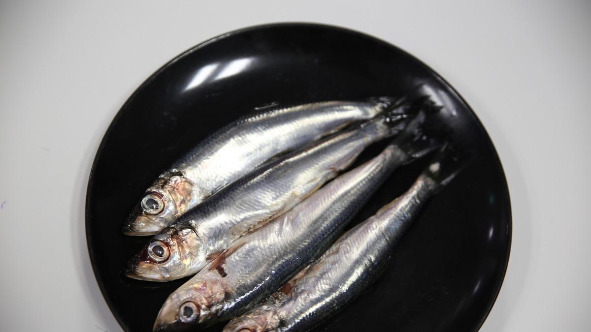 Silakkaa syömällä Itämeri puhdistuu