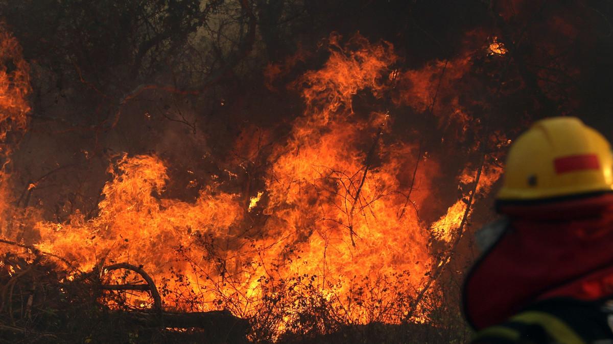 Maailman keuhkot palavat – Pelastavatko kauppasopimukset Amazonin sademetsät?