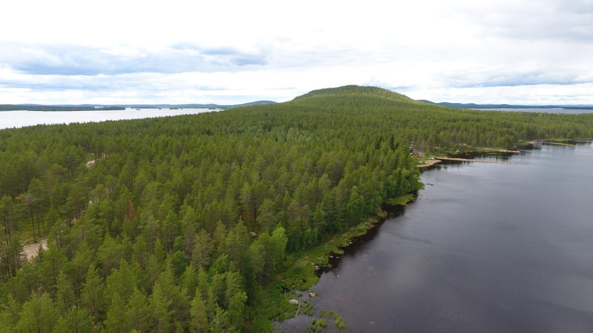 Kemijärvi hakkauttaa luontopolun metsää