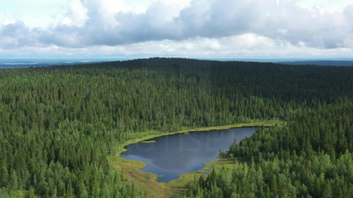 Tältä näyttää harvinaisessa lähes luonnontilaisessa metsässä – Sotkamon Losonvaara on yksi niistä