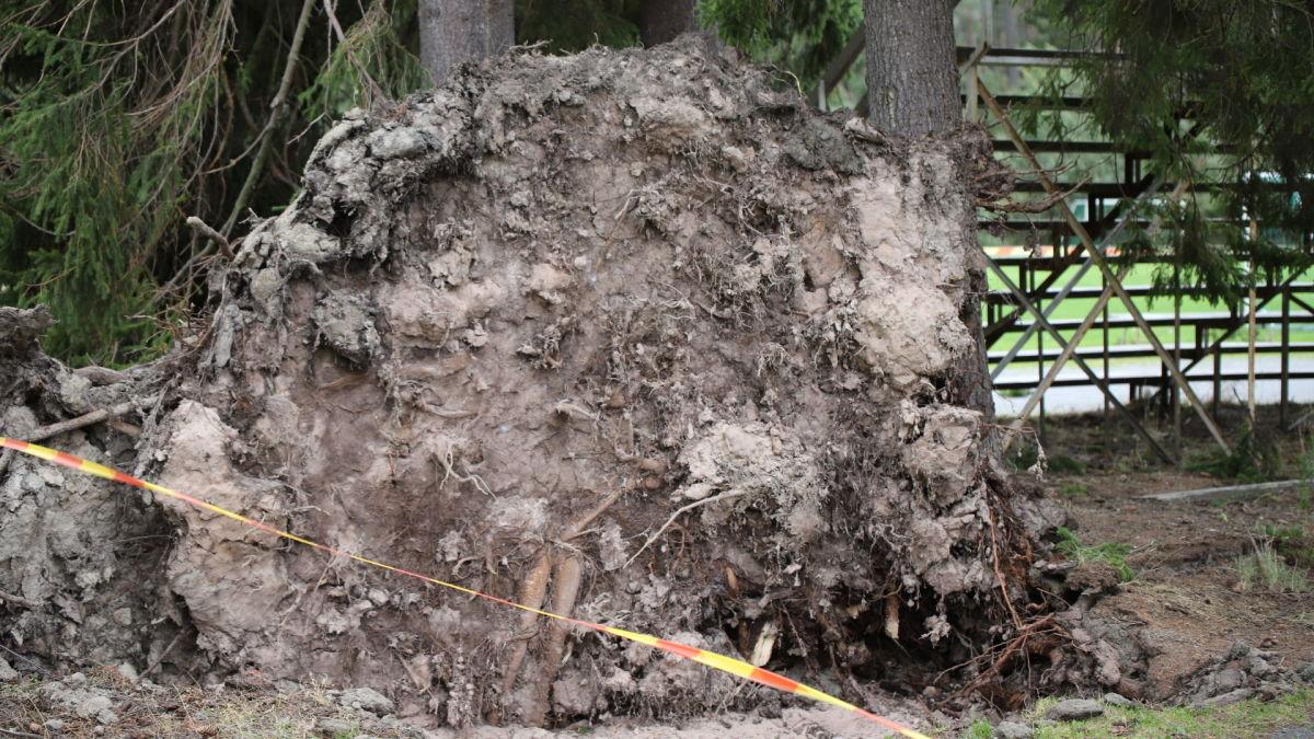 Aila-myrsky riepottelee Lounais-Suomea