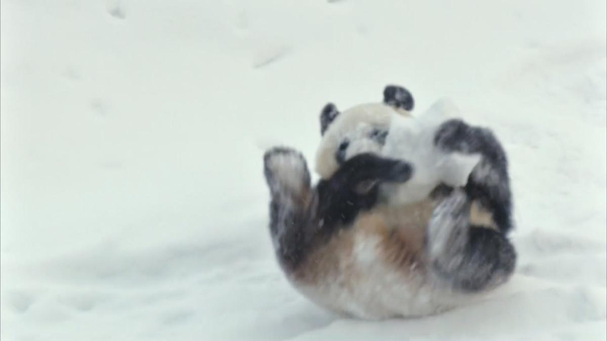 Panda Ähtärissä
