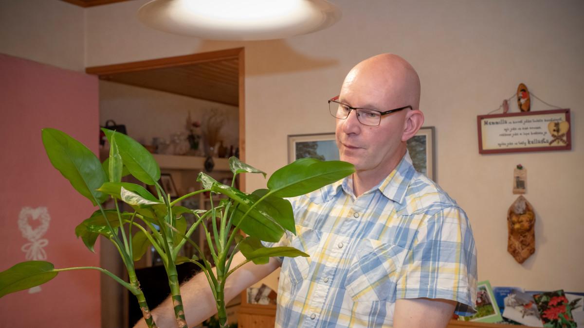 Puutarhuri Marko Ahola onnistuu kuulemma itsekin kukistamaan kasvin silloin tällöin.
