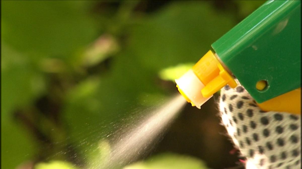 Monsanto-yrityksen Roundup on maailman yleisin glyfosaattimyrkky.
