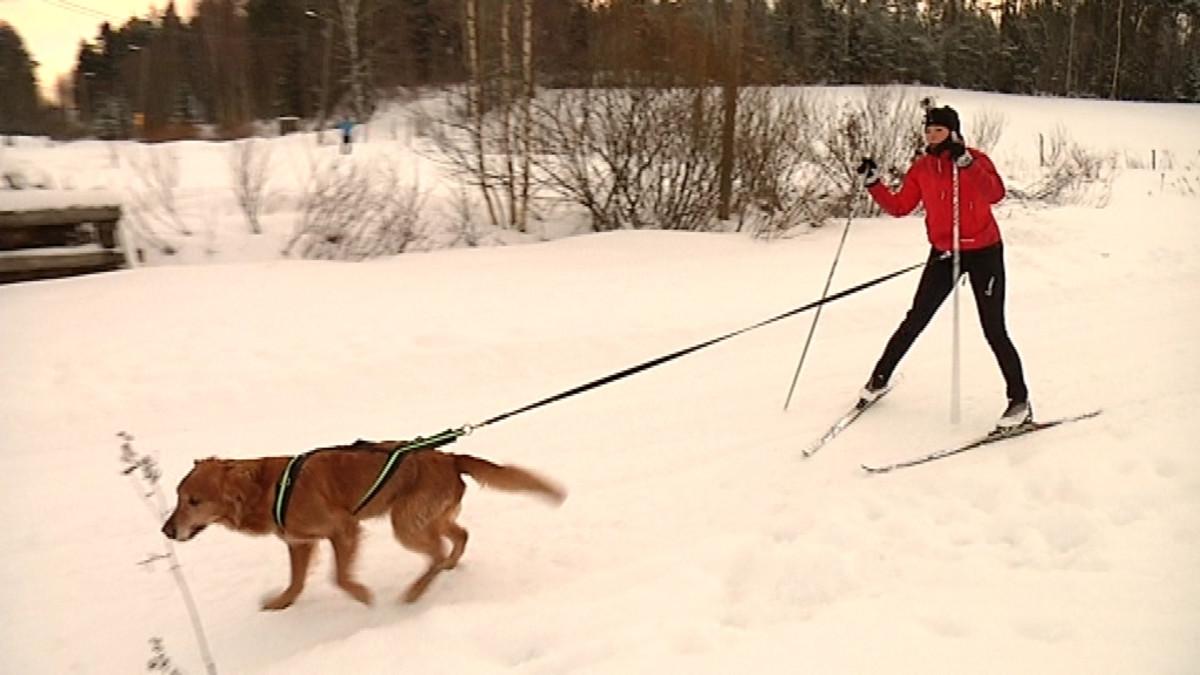 Nainen ja koira hiihtämässä yhdessä.