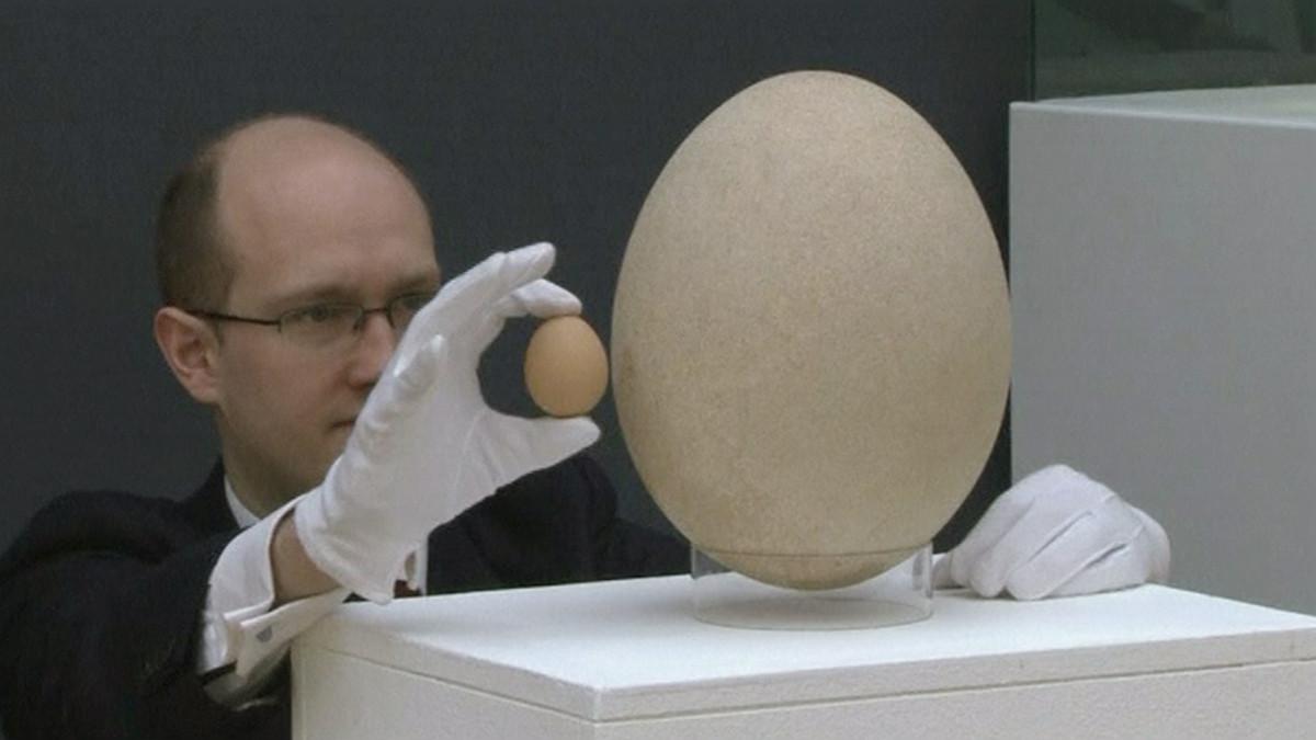 Iso aika munaa
