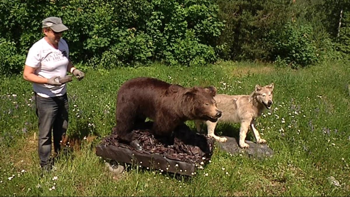 """Kuusamon petokeskus on luovuttanut Askolle """"sitä itteään"""" jota sivellään moottorisoituun karhuun aitouden parantamiseksi."""