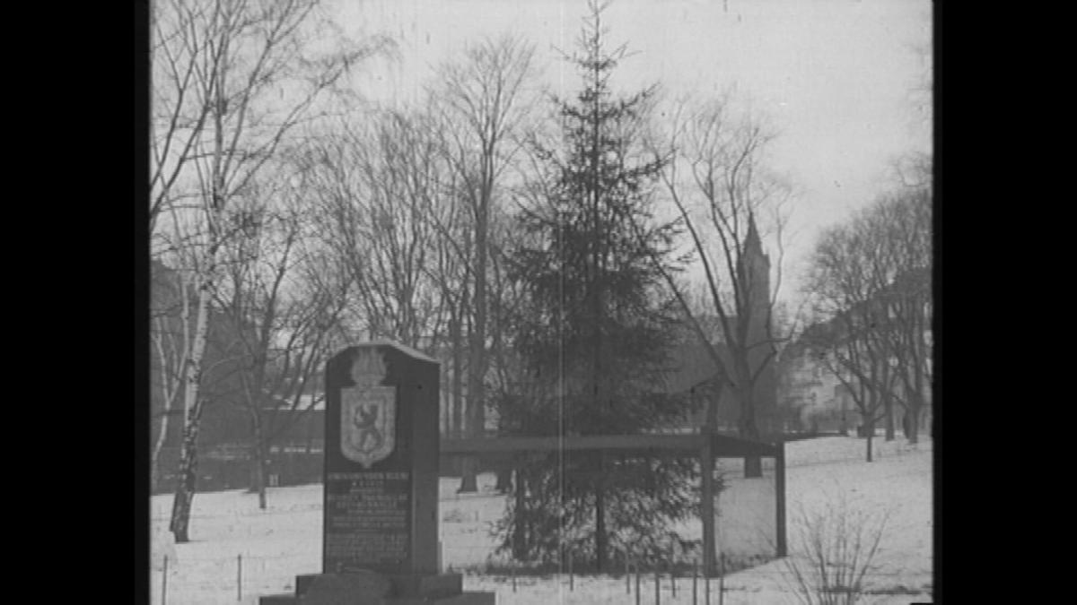 Itsenäisyyden kuusi Helsingissä vuonna 1940.