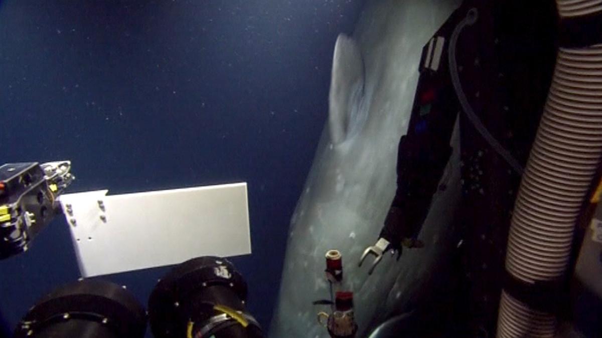 Kaskelotti kiinnostui merentutkijoiden laitteista Meksikonlahdella.