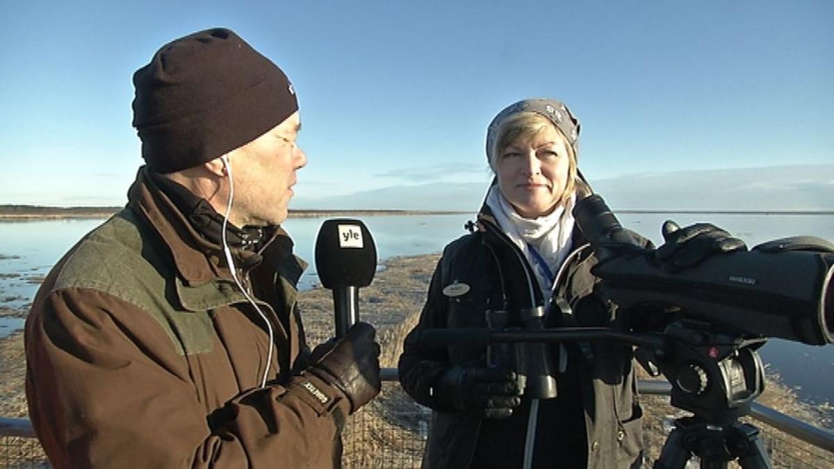Timo Sipola ja Ulla Matturi Virkkulan lintutornissa