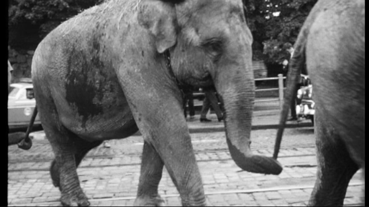 norsuparaat Helsingissä 1964