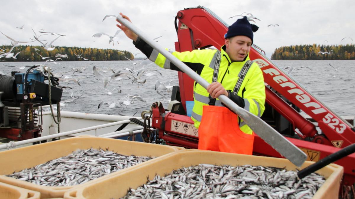 saimaa kalastus muikku troolaus lappeenranta