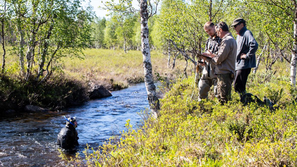 Metsähallituksen tutkijoita kartoittamassa raakkuja.