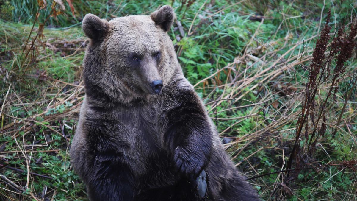 Ranuan eläinpuistossa odotetaan hyvän kesän jälkeen hiljaisempaa talvea.