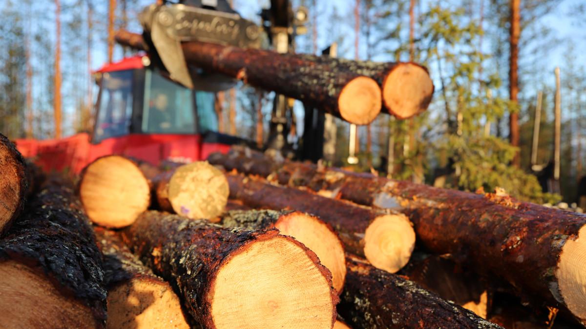 Lämmin ja sateinen syksy haittaa metsätöitä Pohjois-Suomessa.