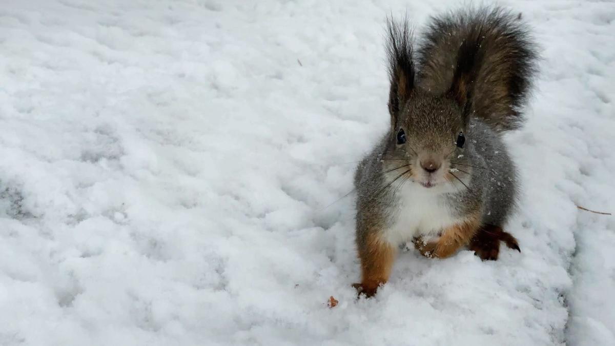 Kesy orava oululaisella Intiön hautausmaalla