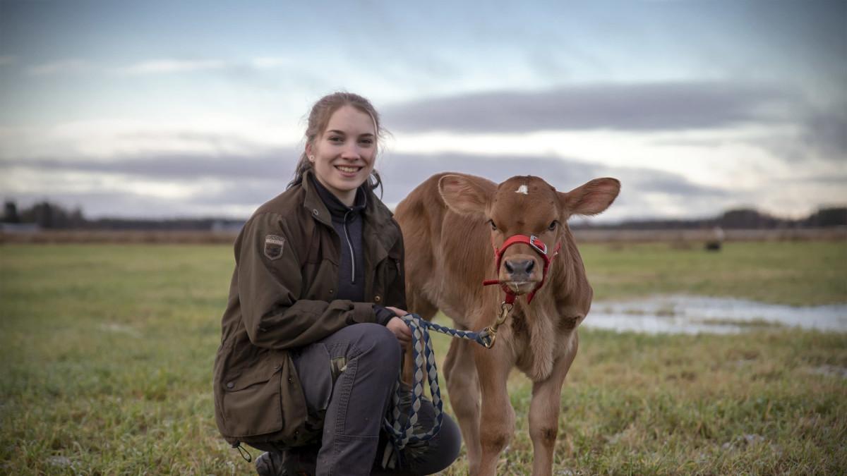 Vilma Nurminen vasikan kanssa