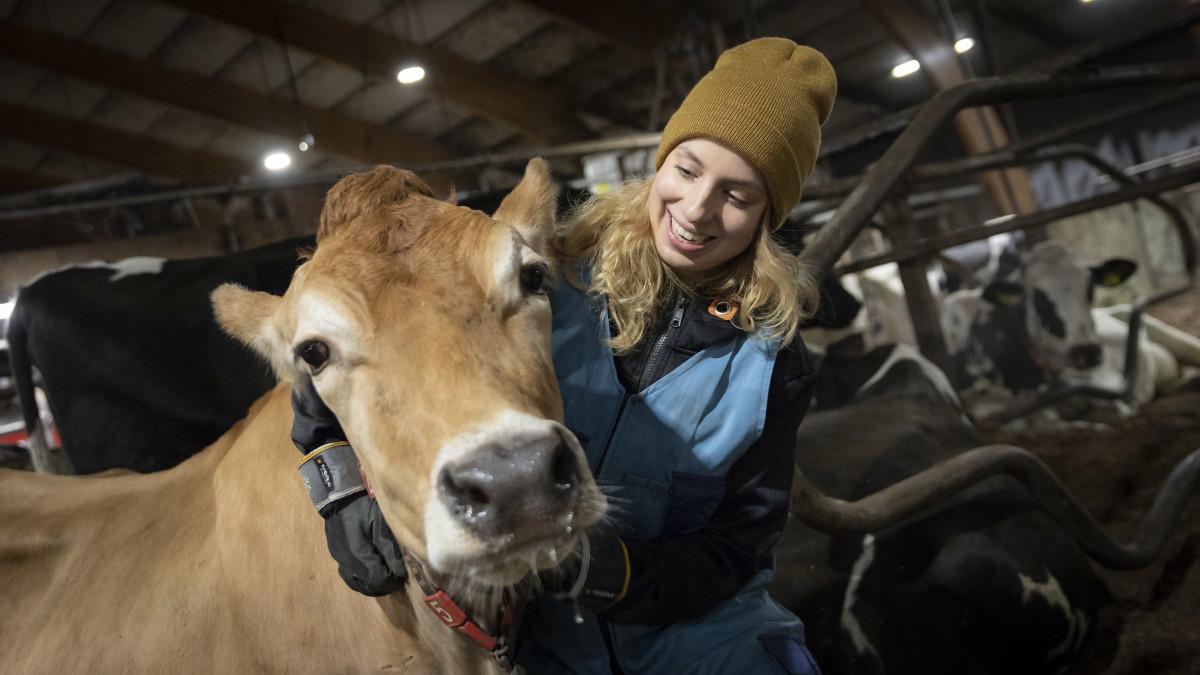 Anna Länsisalmi-Keisala lehmän kanssa navetassa.