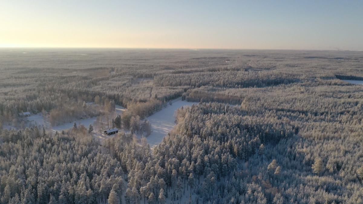 Drooni kuvaa Sanginjoen metsästä