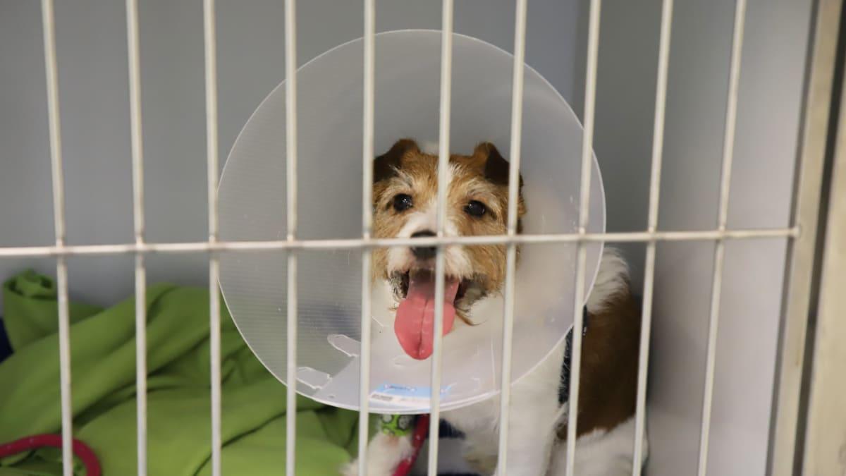 Eläinsairaalassa koetaan iloisia selviämistarinoita