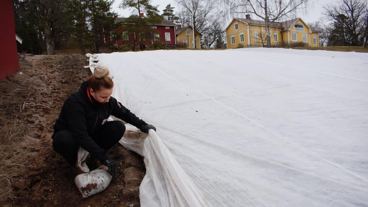 Stiina Lerkki katsoo varhaisperunoiden kasvua.