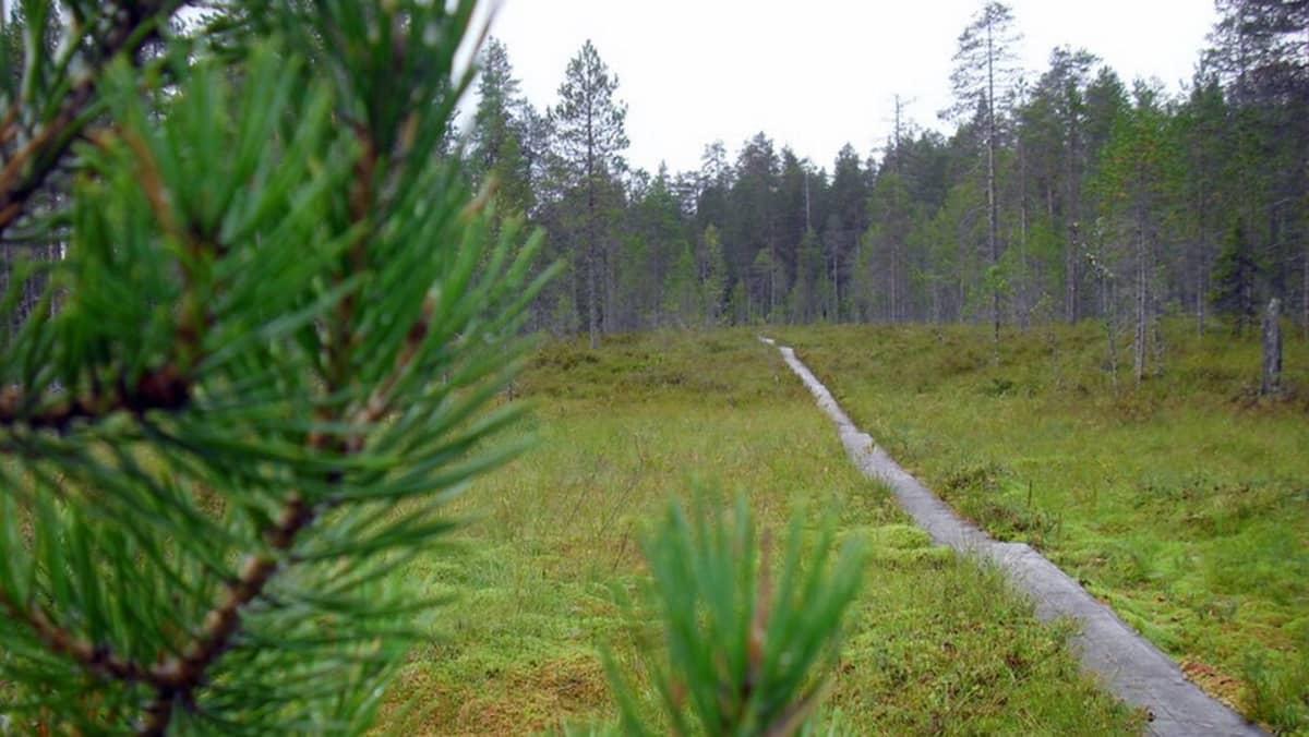 Patvinsuon kansallispuisto.