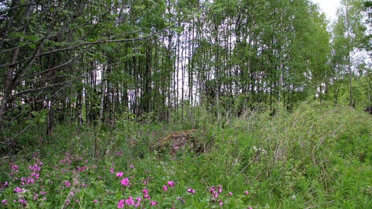Niemenkylä Luumäki uhrikivi
