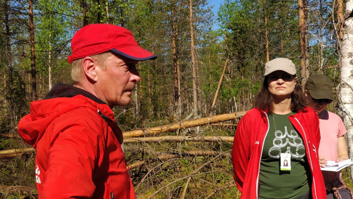 Tykkylumituhoja Kainuun metsissä. Etualalla metsänomistaja Jarmo Tolonen.