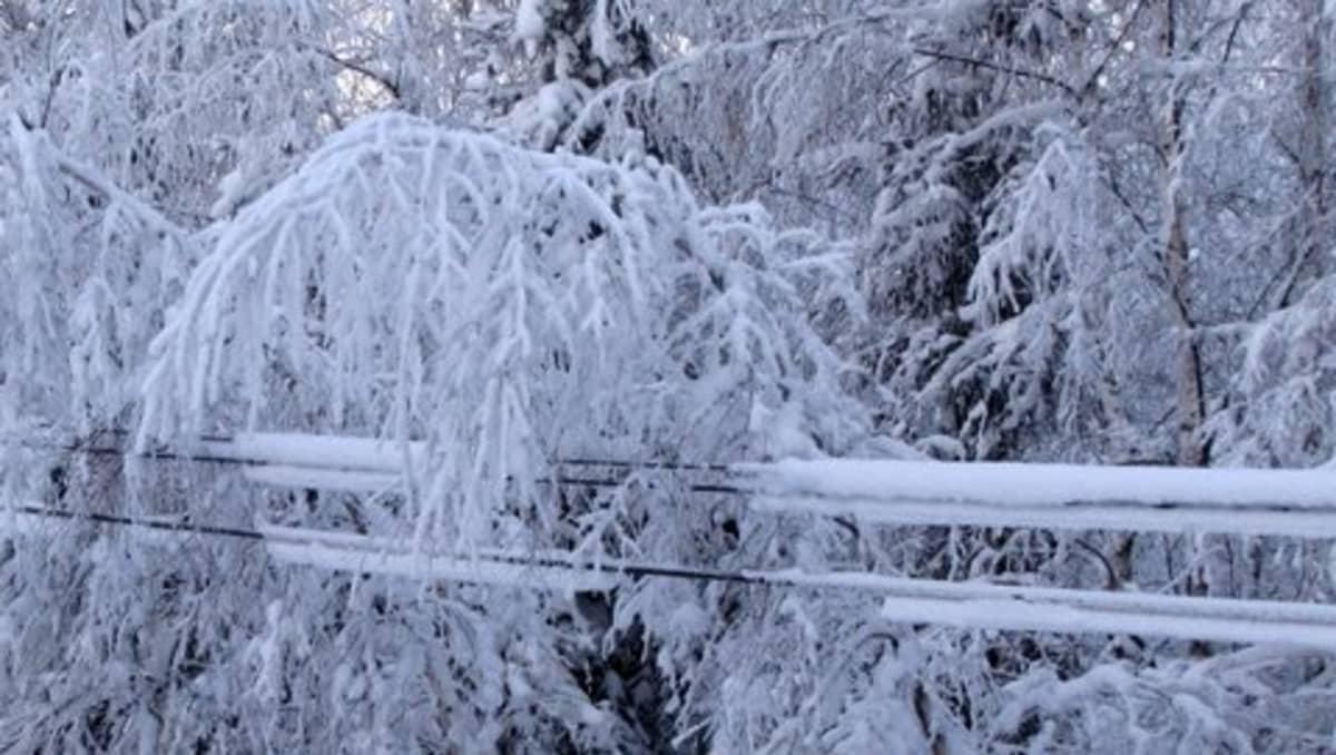 Lumisia oksia linjojen päällä.