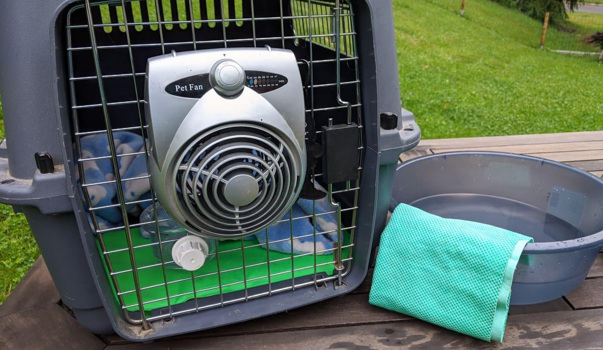 Koiran koppaan on kiinnitetty tuuletin ja vieressä on vesisoikko jonka reunalla on rätti.