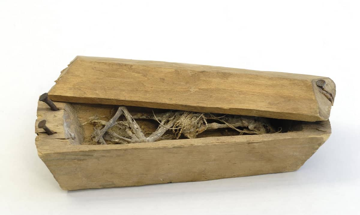 Puinen laatikko, jonka sisällä näkyy luita.
