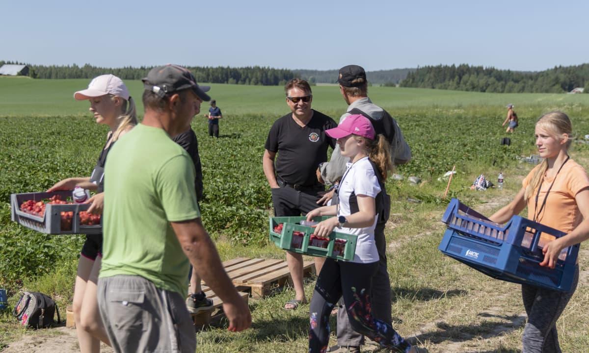 Vesa Koivistoinen keskustelee työntekijöiden kanssa pellon laidalla. Etualalla toiset työntekijät kuljettavat mansikkalaatikoita.