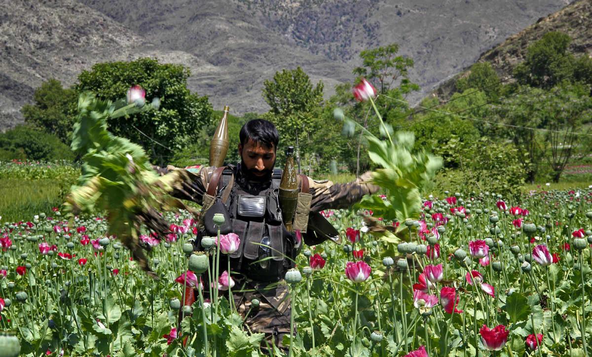 Afganistanin turvallisuusjoukot tuhoavat unikkoviljelmiä Kunar-provinssissa.