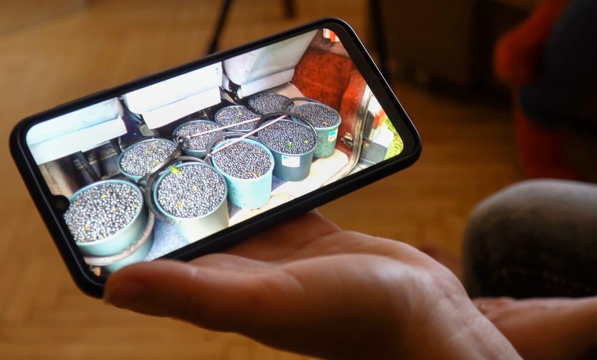 Ukrainalainen näyttää kännykkäkuvan mustikoista joita hän on poiminut