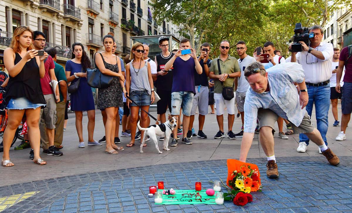 Mies laskee kukkia La Ramblalla terrori-iskuissa kuolleiden muistolle Barcelonassa perjantaina.