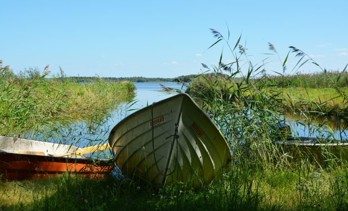 Hinjärven rannassa olevia veneitä