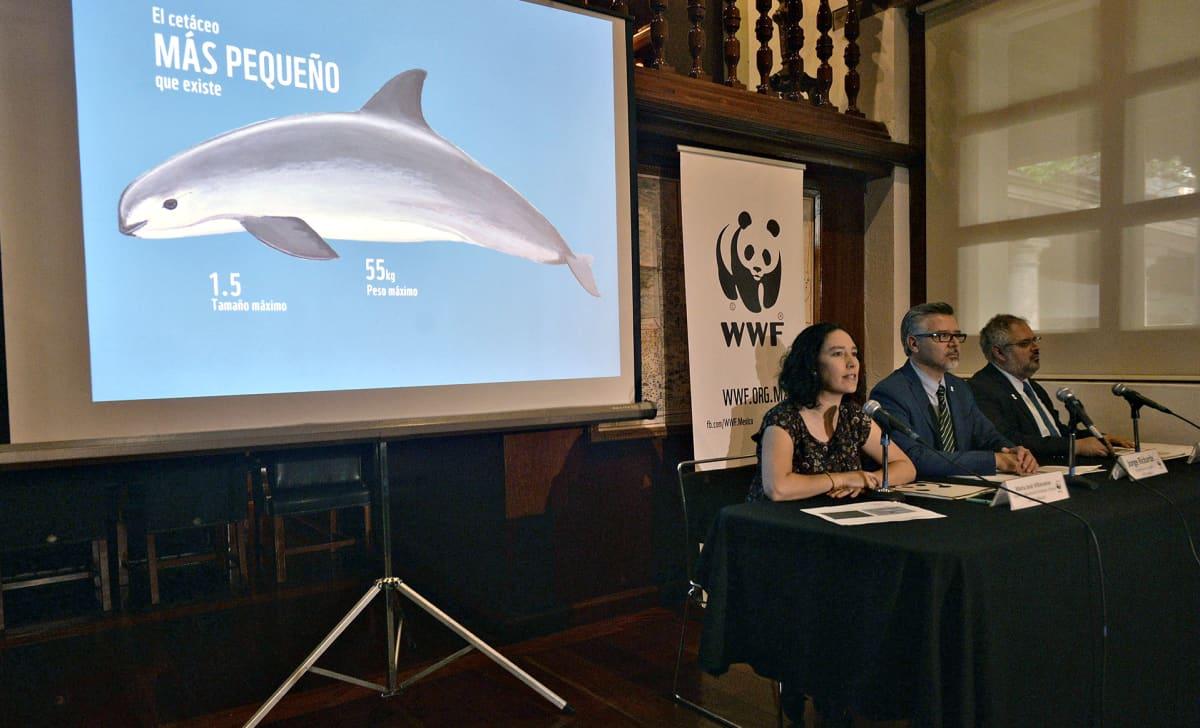 WWF:n johtajat Maria Jose Villanueva (vas.) ja Jorge Rickards (kesk.) puhumassa kalifornian pyöriäisiä koskevassa lehdistökonferenssissa.