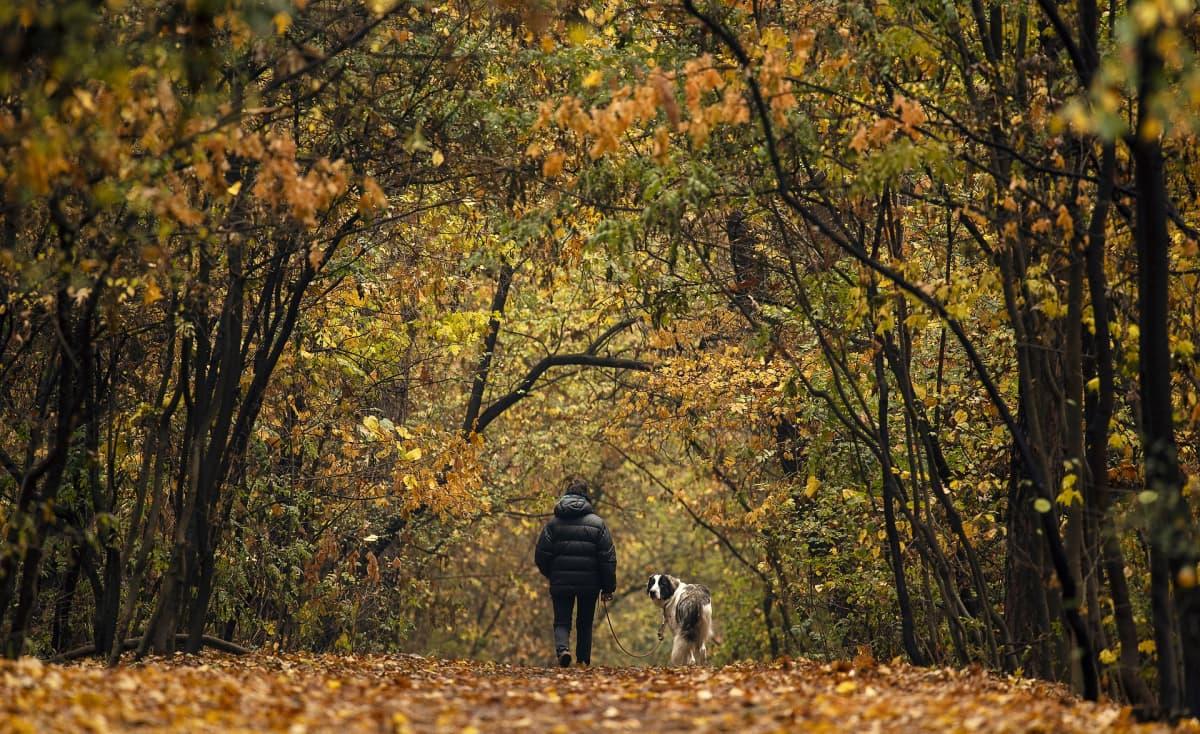 Nainen käveli koiran kanssa puistossa Sofiassa, Bulgariassa. Marraskuun puolivälissä lämpötila oli vielä 22 astetta.