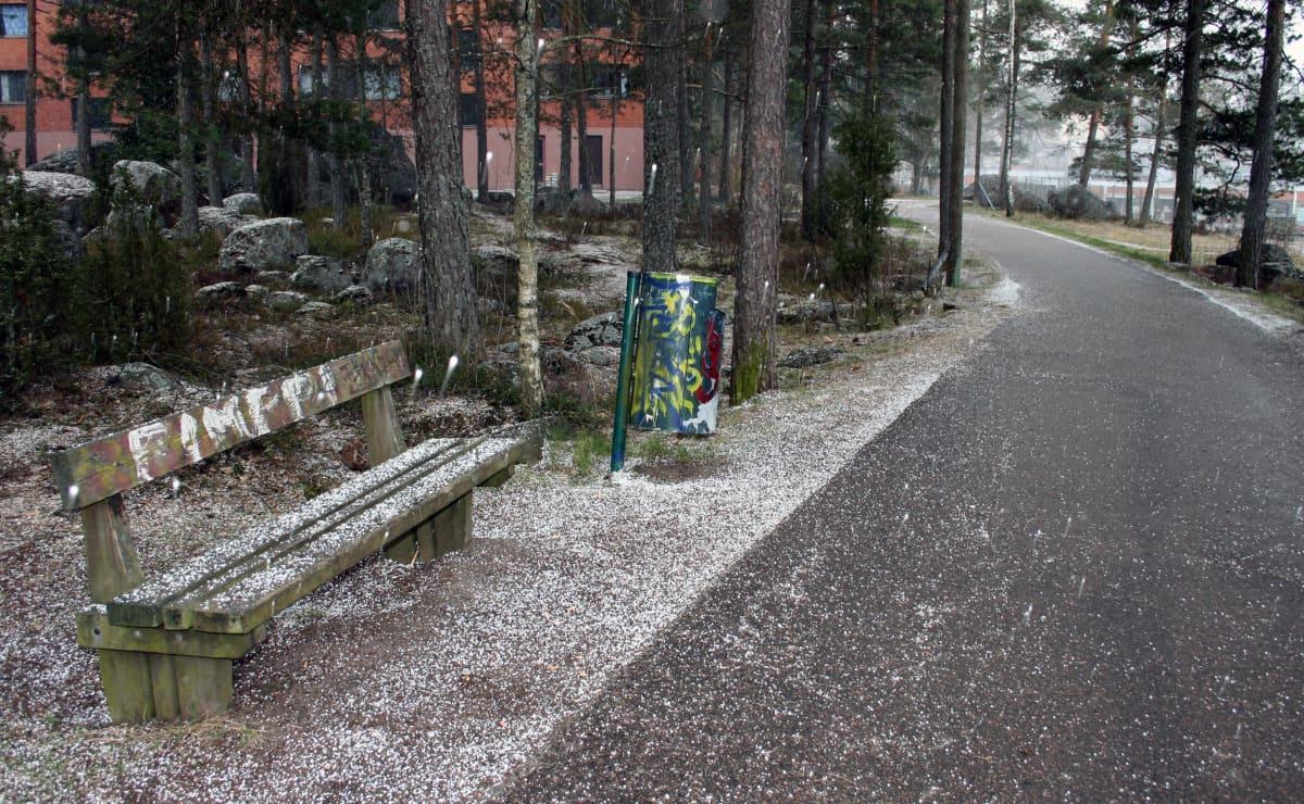 Puistonpenkki kävelytien varressa.