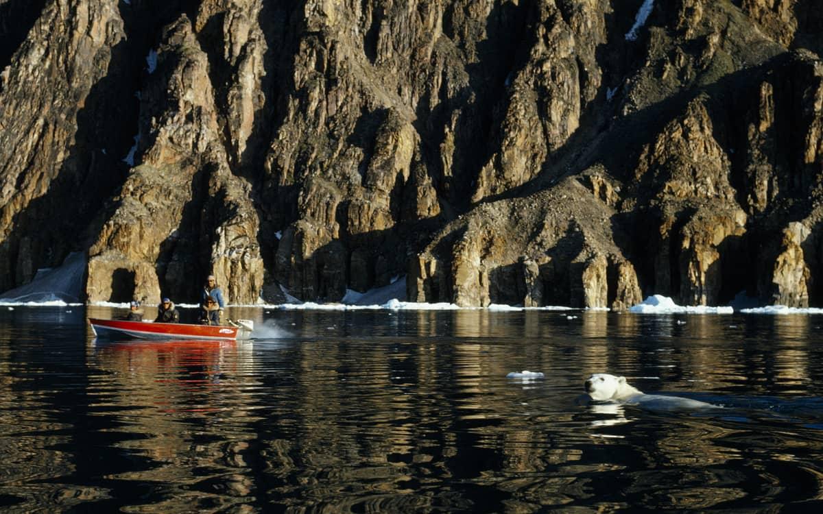 Inuitit katsoivat jääkarhun uintia Baffinin saarella vuonna 2012.